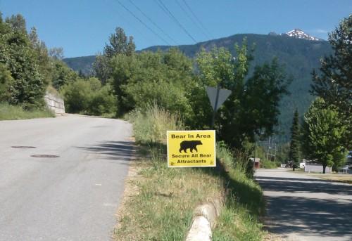 Bear In Area Photo - Sue Davies