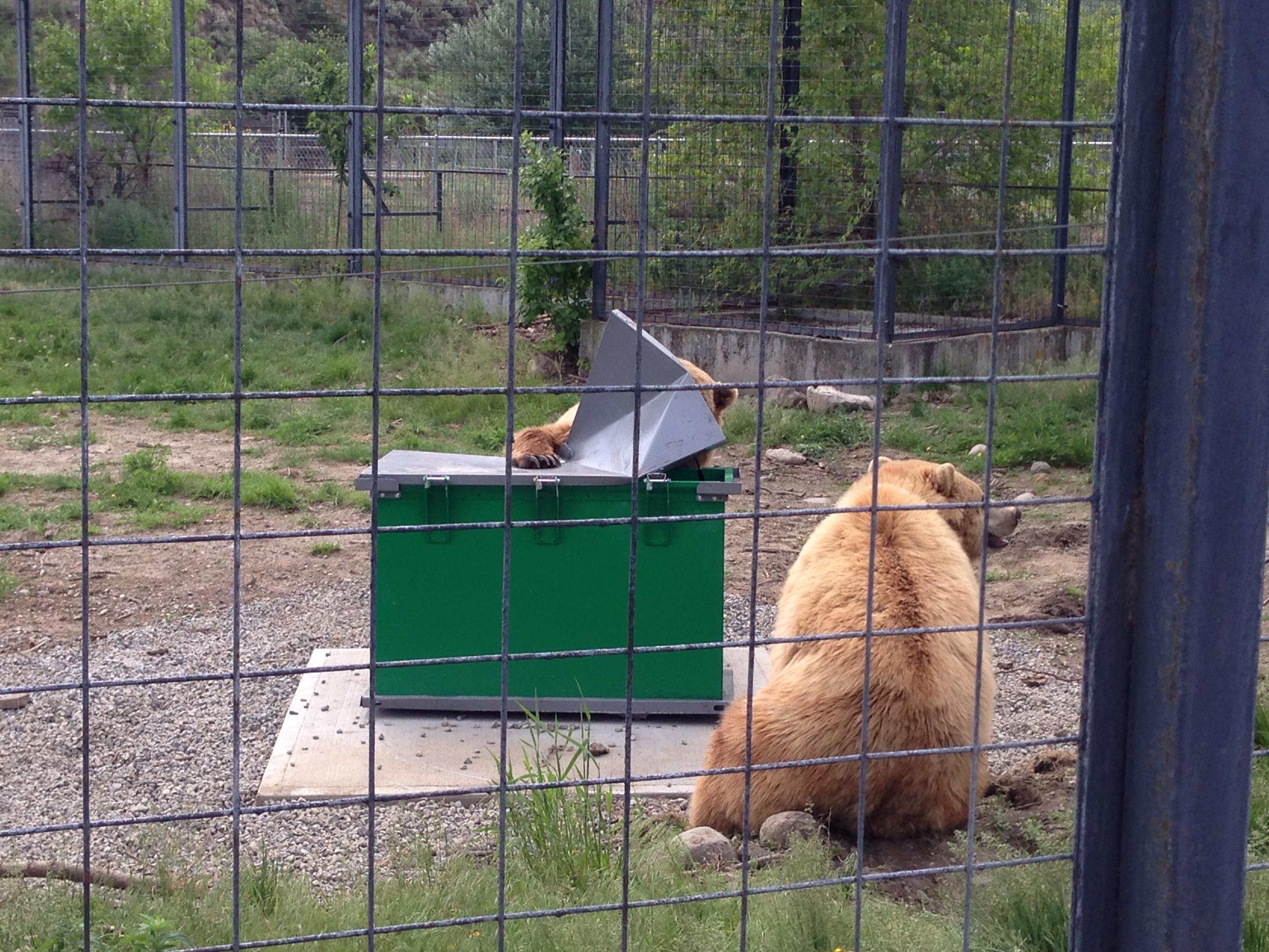 Bear Resistant bin testing